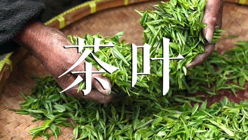 汉中仙毫茶叶